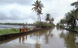 Los backwaters