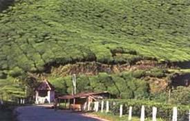 La plantación de especias