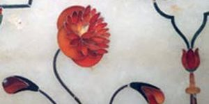 Oriental poppy, poppy